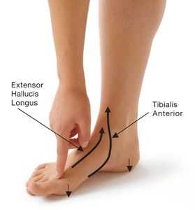 Bunion Pain Relief