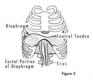 Diaphragm Exercises