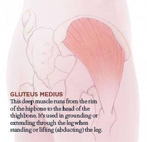 Gluteus Medius and Hip Pain