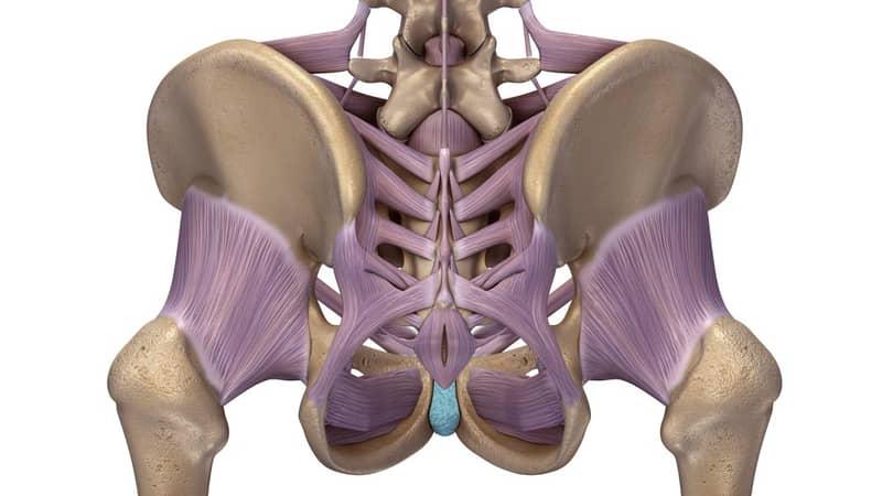 sacroilliac anatomy